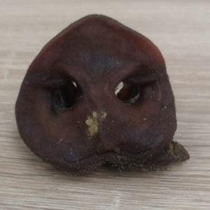 Friandises naturelles - groin de cochon